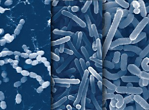 An Introduction to Probiotics and Its Potential in Clinical Applications