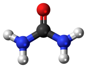 Urea Hydrolysis